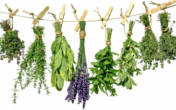 Kalendar branja biljaka