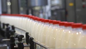 Japanese-Milk