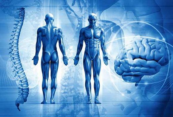 ljudsko telo 11