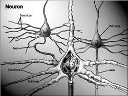 sinapse12