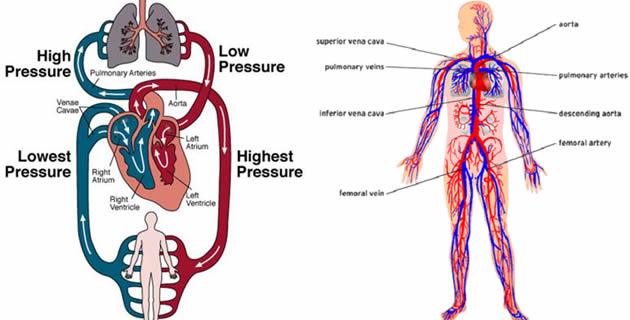 krvni pritisak3