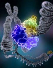 DNA-ligasi