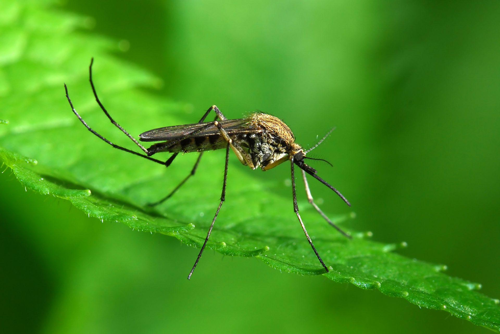 Izujedali su vas komarci? Evo šta može da vam pomogne!