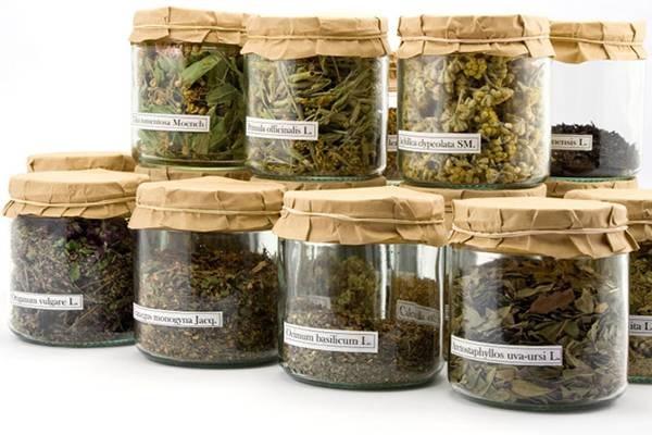 Koje su to najvažnije lekovite biljke zimi?