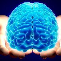 Nedostatak vode doslovno smanjuje mozak