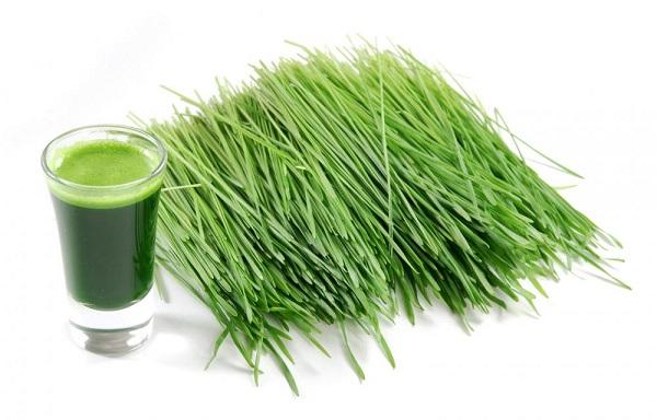 Pomladite se i detoksikujte pomoću mlade pšenice!