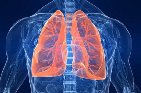 Anatomija pluća