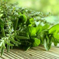 Biljke koje čiste pluća