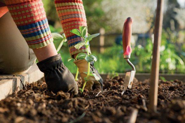 Vrtlarenje je terapija