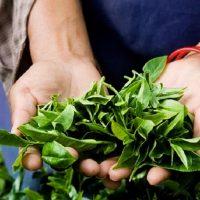 Bolesti povrća i zaštita u organskoj proizvodnji
