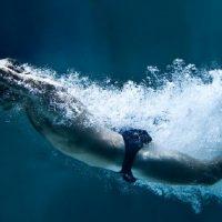 Dobrobiti plivanja